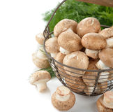 Royal mushrooms in a basket Stock Photo