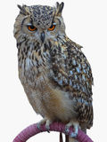 Royal owl isolated over white Stock Photography