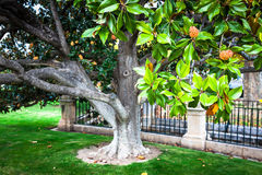 The Royal Palace gardens, Aranjuez,Community of Madrid,Spain,Eur. Ope Stock Photography