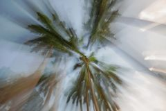 Royal Palms abstract in Greynolds Park, North Miami Beach, Florida stock photography