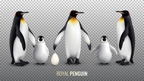 Royal Penguin Realistic Set. With with egg chick and adult birds on transparent background vector illustration vector illustration