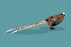 Royal pheasant. vector Illustration Stock Photos