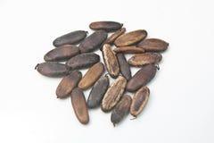 Royal Poinciana or Flamboyant Seed Stock Image