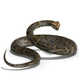 Royal python. 3D rendering of a royal python with clipping path and shadow over white Royalty Free Stock Image