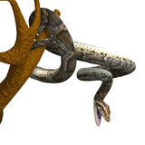 Royal python. 3D rendering of a royal python with clipping path and shadow over white Stock Photography
