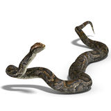 Royal python. 3D rendering of a royal python with clipping path and shadow over white Royalty Free Stock Photos