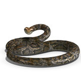 Royal python. 3D rendering of a royal python with clipping path and shadow over white Royalty Free Stock Photography