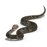 Royal python. 3D rendering of a royal python with clipping path and shadow over white Stock Photo