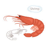 Royal red shrimp set with caption. Isolated illustration on white background. Seafood symbol. Royalty Free Stock Images