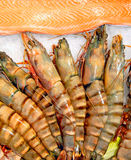 Royal shrimps and fillet of a trout Royalty Free Stock Images