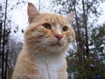 Royal Stray. A local stray cat Royalty Free Stock Photos