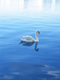 Royal Swan. A majestic swan on the Alster Lake in Hamburg Royalty Free Stock Images