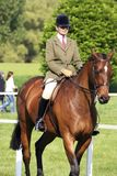 Royal Windsor Horse Show Stock Photography