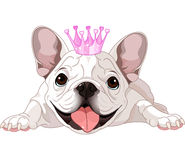 Royalty bulldog Stock Photography