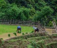 Terraced rice fields on rain season in Vietnam stock photography