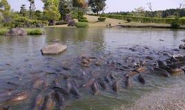 Royaume de poissons Photographie stock