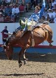 Royce Ford no debandada de Greeley (editorial) Fotos de Stock Royalty Free
