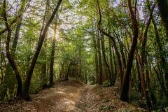 Rozanielona podwyżka w Kalifornia Redwoods daleko linia horyzontu bulwar Fotografia Stock