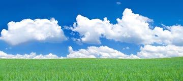 rozanielonego obszaru trawiasty panoramiczny widok Zdjęcie Royalty Free