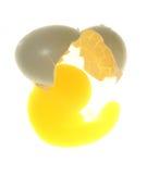 rozbite jajko Obrazy Stock