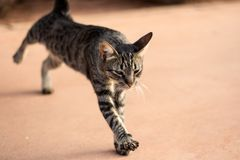 Rozciąganie kot przy Afrykańskim kurortem Zdjęcie Royalty Free
