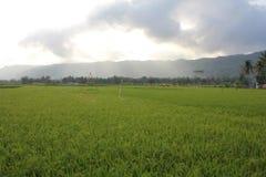 Rozciągliwość ryż obraz royalty free