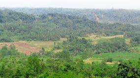 Rozciągliwość ryż pola otaczający wzgórzami Obraz Royalty Free