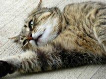 Rozciągania Tabby kot na ganeczku Fotografia Royalty Free