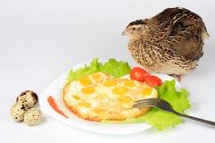 Rozdrapani jajka od przepiórek jajek i żywej przepiórki Obrazy Royalty Free