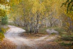 Rozdroża w jesień drewnie. zdjęcia royalty free
