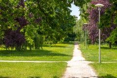 Rozdro?a ?lada w parku Burzowe zielenie, udziały krzaki i zieleni drzewa, lampiony stoi wzdłuż ścieżki w zdjęcia stock