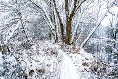 Rozdziela zamarzniętego staw i ścieżkę wokoło go w zimie Zdjęcia Stock