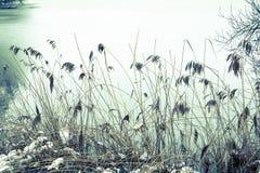 Rozdziela zamarzniętego staw i ścieżkę wokoło go w zimie Fotografia Royalty Free