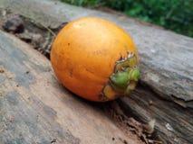 Rozdzierająca arecanut owoc zdjęcie stock