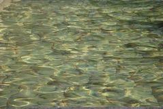 rozdzierająca nawierzchniowa woda Fotografia Royalty Free