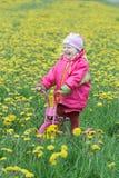 Roześmiana berbeć dziewczyny pozycja przy wiosen kwiatonośnymi dandelions łąkowymi na dzieciakach różowych i żółtym trójkołowu zdjęcie stock