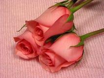 Roze 1 van de baby Royalty-vrije Stock Foto's