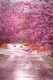 Roze Stock Foto