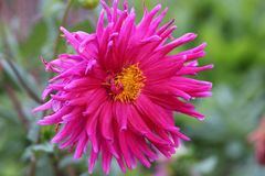 Roze Stock Foto's