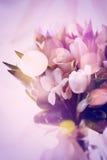 Roze Abstract Beeld van de Lentebloemen Stock Afbeelding