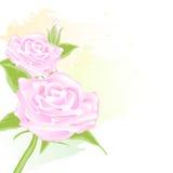 Roze abstracte de waterverfstijl van Rose Floral voor achtergrond Royalty-vrije Stock Foto's