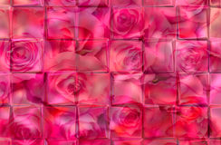 Roze achtergrond Stock Afbeelding