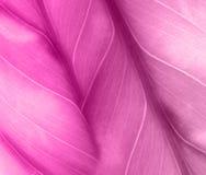 Roze achtergrond met blad Royalty-vrije Stock Fotografie