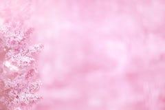 Roze achtergrond met lilac bloemen Stock Foto's