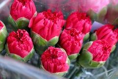 Roze anjer Royalty-vrije Stock Fotografie