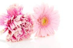 Roze anjer en gerber bloemen Royalty-vrije Stock Afbeeldingen