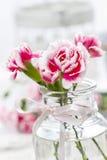 Roze anjerbloem in glasvaas Stock Fotografie