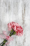 Roze anjerbloem op witte achtergrond Royalty-vrije Stock Foto