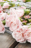 Roze anjerbloemen Stock Fotografie