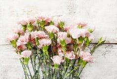 Roze anjerbloemen op achtergrond Stock Foto's